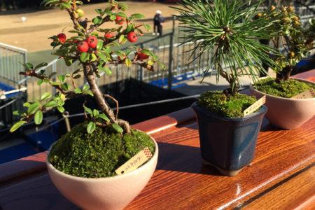 ゴルフ日本シリーズJTカップでミニ盆栽の展示即売